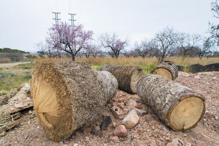 cut: Cut trees.