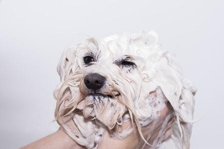 Showering dog. Stock Photo - 44661367