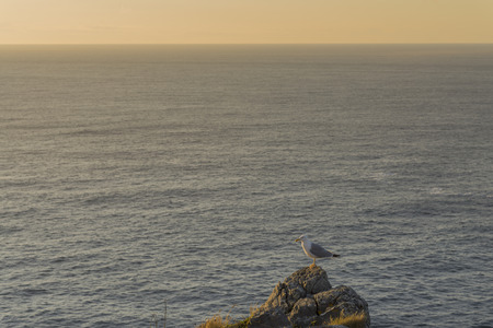 living being: Seagull.