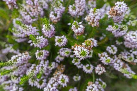 flowered: Flowered plant.