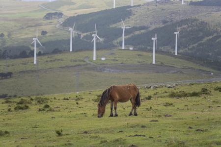 grazing: Horse grazing. Stock Photo