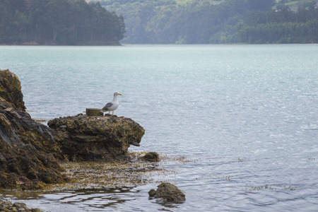 water ecosystem: Seagull.