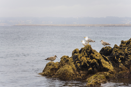 seabirds: Seagulls. Stock Photo