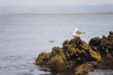 marine bird: Seagulls. Stock Photo