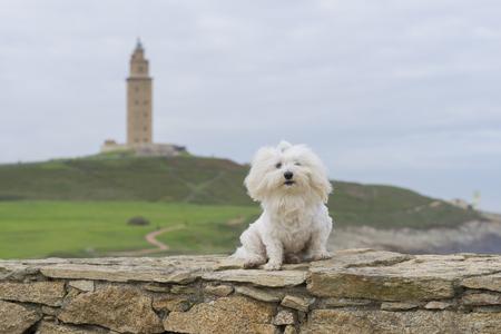 hercules: Maltese and Hercules tower, La Coruna, Spain. Stock Photo