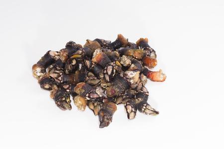 barnacles: Barnacles.