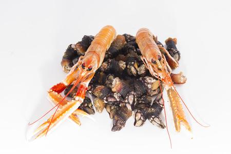 barnacles: Crawfish and barnacles.
