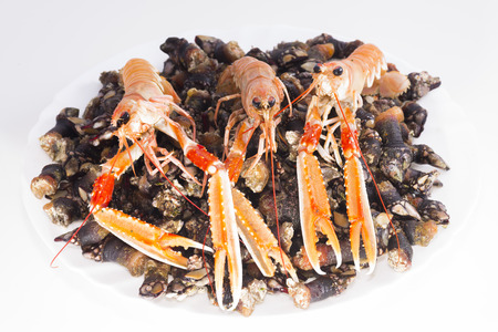 decapod: Barnacles and crawfish. Stock Photo