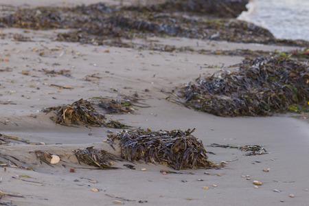 algas marinas: Algas marinas.