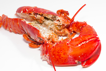 expensive food: Lobster.