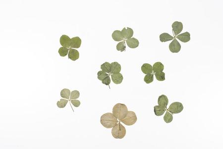 clovers: Four leaf clovers.