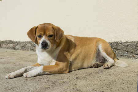 fidelidad: Perro.