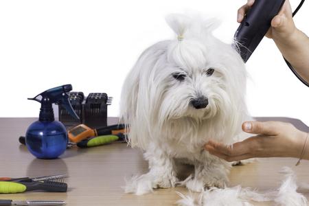 cutting hair: Cutting hair pet.