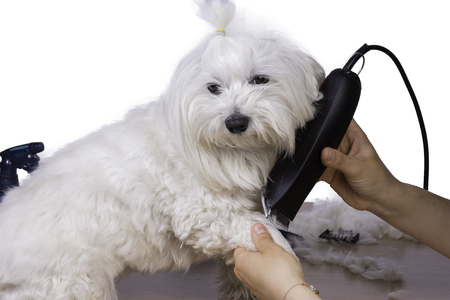 hair cutting: Pet hair cutting. Stock Photo