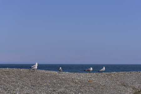 living beings: Seagulls. Stock Photo
