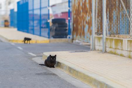 Black cat in the street.