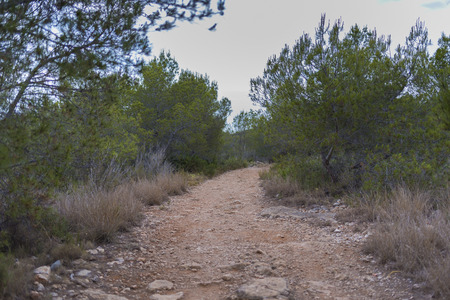 dirt road recreation: Path. Stock Photo