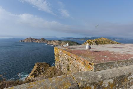 seres vivos: Islas Cíes (Pontevedra, España). Foto de archivo