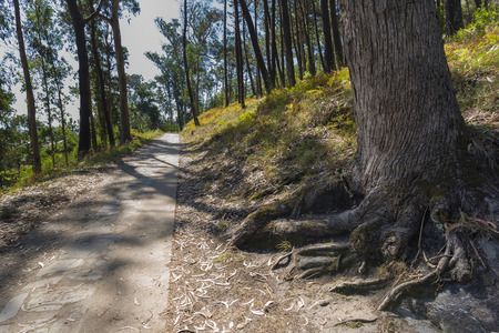 hiking trail: Hiking trail in Cies Islands (Pontevedra, Spain). Stock Photo