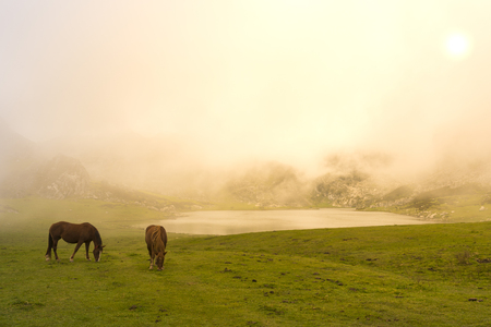covadonga: Horses in La Ercina lake (Lakes of Covadonga, Asturias - Spain). Stock Photo