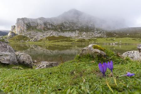 Flowers in La Ercina lake (Lakes of Covadonga, Asturias - Spain).