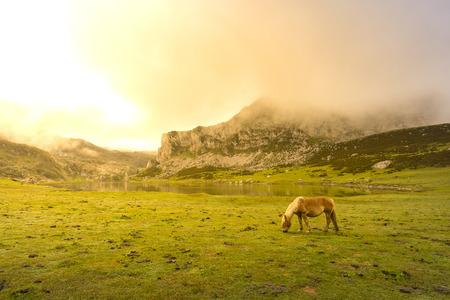 covadonga: Horse in La Ercina lake (Lakes of Covadonga, Asturias - Spain).