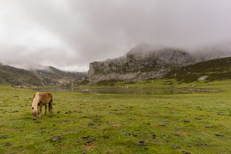 Horse in La Ercina lake (Lakes of Covadonga, Asturias - Spain).