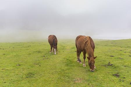 Horses in Lakes of Covadonga (Asturias, Spain).