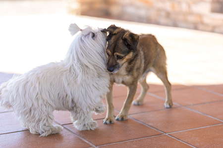 socialization: Dogs playing.