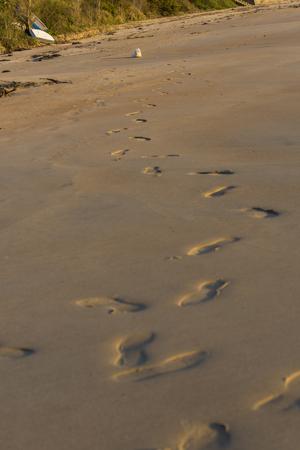 padding: Pet and footprints.