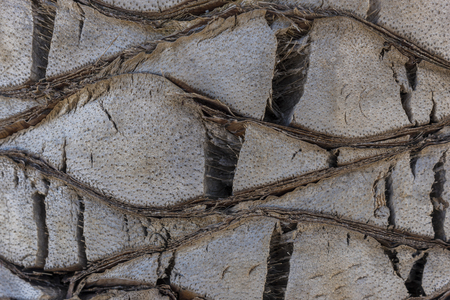 stuffing: Palm tree trunk texture.