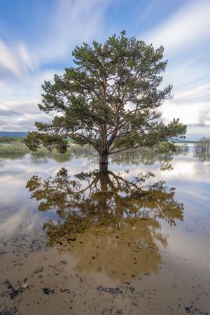 Tree in Playa de Pita, in the swamp of Cuerda del Pozo (Vinuesa, Soria - Spain).