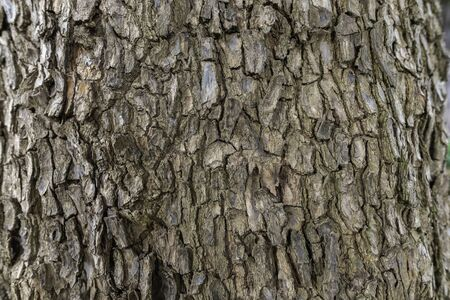 Tree bark background 写真素材