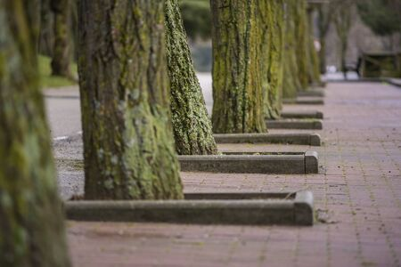 Tree trunks in a row.