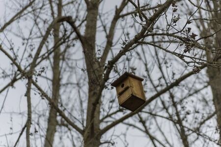 Bird shelter in a tree. 스톡 콘텐츠 - 146304373
