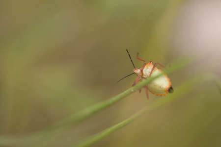 underbelly: Selective focus close-up of an insect perched on a blade of grass. Horizontal shot.