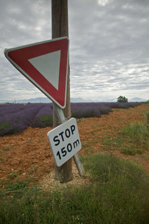 Road sign tied to a power pole warns drivers of an upcoming stop in the countryside. Lavender fields are in the background, and the sky overhead is overcast. Vertical shot. Stock Photo - 6628024