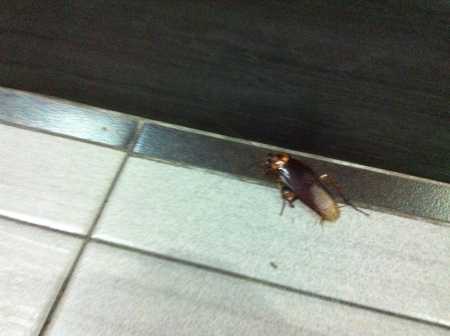 roach: Roach
