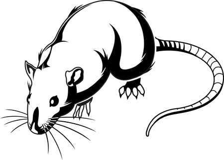disgusting: Rat Graphic Illustration