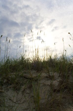 Sea oats on the sand dunes of a beach at sunset Фото со стока