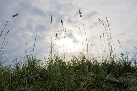 sea oats: Sea oats on the sand dunes of a beach at sunset Stock Photo