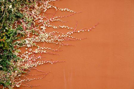 Una planta que crece horizontal en un edificio de color terracota. Foto de archivo - 5576157