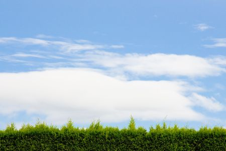A green hedge and blue sky with clouds forms a unique and interesting abstract image that is very simple and perfect for design usage such as background image or room for text and copy space. photo
