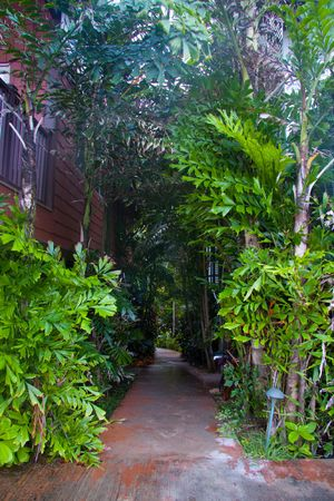 walking path: Plants and trees overwhelm a walking path in Oahu Hawaii. Stock Photo