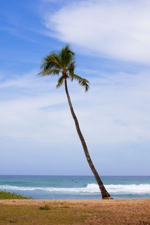diagonally: A palm tree juts out from the shore diagonally at sunset beach in oahu hawaii. Stock Photo