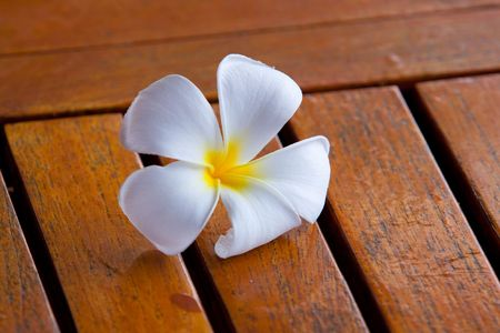 A white plumeria flower sits on a wood table in the tropical climate of hawaii.