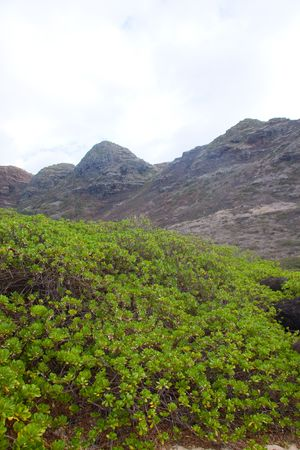 drab: Vibrant green plants contrast against the dark drab colors of the mountains behind them in oahu hawaii. Stock Photo