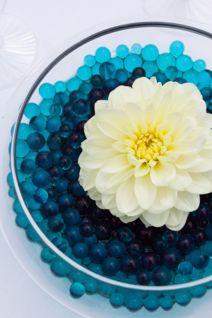 table: A white flower on blue gels for the decor at a wedding ceremony