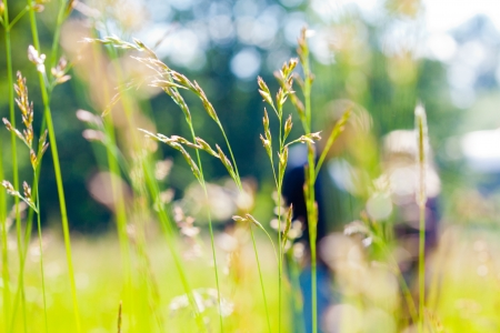 A couple is out of focus behind some green grass in a field or meadow  photo