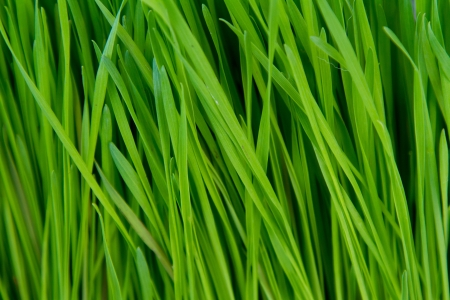 Green grass photographed from the side to show the stalks rising up in a unique abstract background texture. Reklamní fotografie
